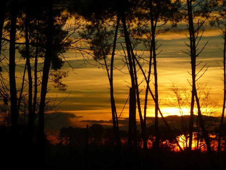 Forêt_des_Landes_embrasée